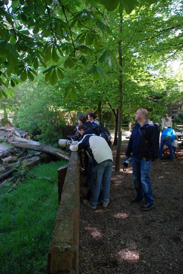http://www.jeroenen.nl/images/2012-05-12/kamelen-actie-640.jpg